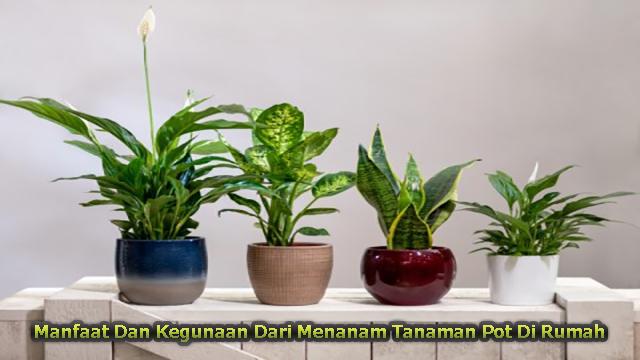 Manfaat Dan Kegunaan Dari Menanam Tanaman Pot Di Rumah